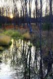 Pasture Stream Sunrise