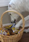 Joey's Easter Basket