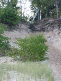 IMG_0438.JPG  Hiking from the beach to Pine Bluff Camp