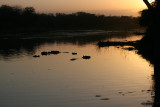 Lake Panic - Kruger National Park
