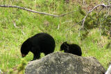 Rosie and cub