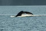 Eric D7000 Whales 038-crop.JPG
