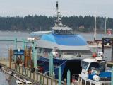 Harbour Lynx