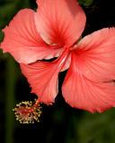 ds20060306_0117a2w Flower.jpg