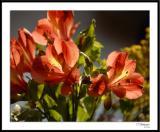 ds20060409_0137awF Flowers.jpg