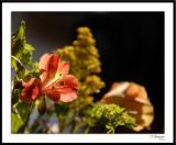 ds20060409_0139awF Flowers.jpg