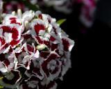 6/6/06 - Flower Ballds20060604_0099aw Flowers.jpg