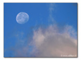 Mond am Morgenhimmel / Moon in the morning sky  (8928)