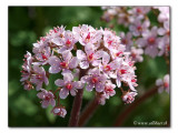 Fruehlings-Vorfreude / foretaste of spring (3978)