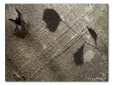 Baumrinden- Schattenbild / shadow image on bark (3892)
