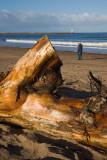 driftwoodf1650mm-2875.jpg