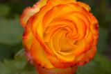 rosetequilasunrise2sk.jpg