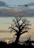 PHOTOGRAPHISME ART / Trouvez les 9 silhouettes d'oiseaux et la cabane dans l'arbre.