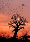 PHOTOGRAPHISME ART / Essayez de trouvez les 9 silhouettes d'oiseaux et la cabane dans l'arbre