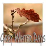 Grey Winter Days