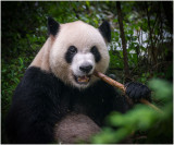 Bamboo Snack