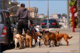San Francisco Dog Walker
