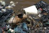 Croc-a-dump