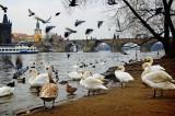 birdy city