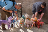 Colorful Pooches