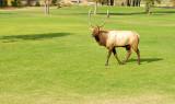 Bull S.jpg