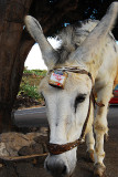 DONKEY FOOD COLLECTION S.jpg