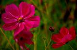 Family of flowers S.jpg
