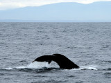 WHALE TAIL TALE