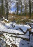 Beechwoods, Standish 3