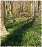 Standish Woods, spring(2)