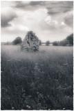 Stone, Minchinhampton