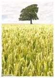 Harvest(2009)