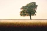 A46 tree design