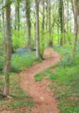 1765-woodland walk