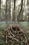 1832-woodpile