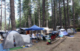 Our group campsite under the tall trees