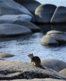 Furry little friend, Tahoe State Park, Nevada