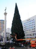Christmas Tree at Union Square; lighting to follow in two weeks