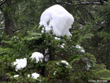 Nice seasonal treetop, courtesy of Mother Nature