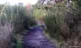 Belinda Point Trail