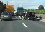 Rush hour in Mullinavat.jpg