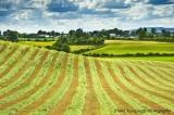 The Irish Countryside.jpg