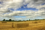 Harvest Time.jpg