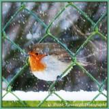 Poor Little Robin.jpg
