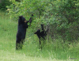 Mother and Baby in Cades Cove TN