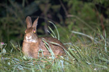 Bunny at Cowee Mountain Overlook