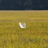 Bird in Flight Fort Clinch