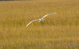 Bird in Flight Fort Clinch  2