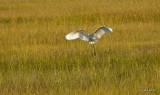 Bird in Flight Fort Clinch  3