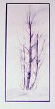 JRW - Winter Birches